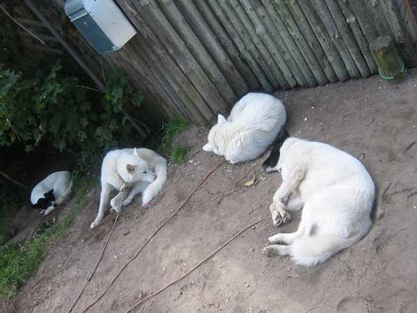 3---hundested-(26)